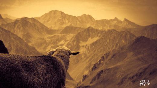 Enfant de la montagne
